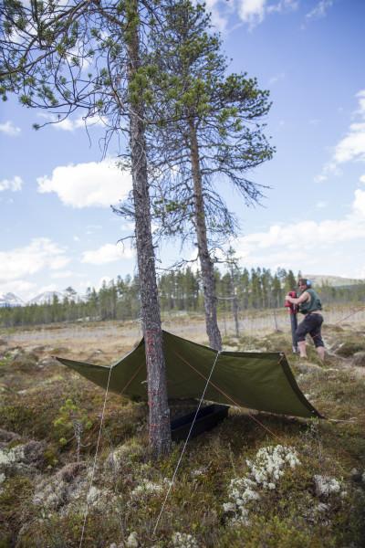 Feller til soppmygg med Steffen i bakgrunnen som fanger teger i mosen med støvsuger! (Foto: L. K. Hagenlund.)
