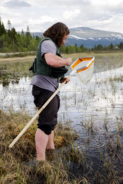 Steffen på jakt etter vannlevende teger (foto: L.K. Hagenlund).