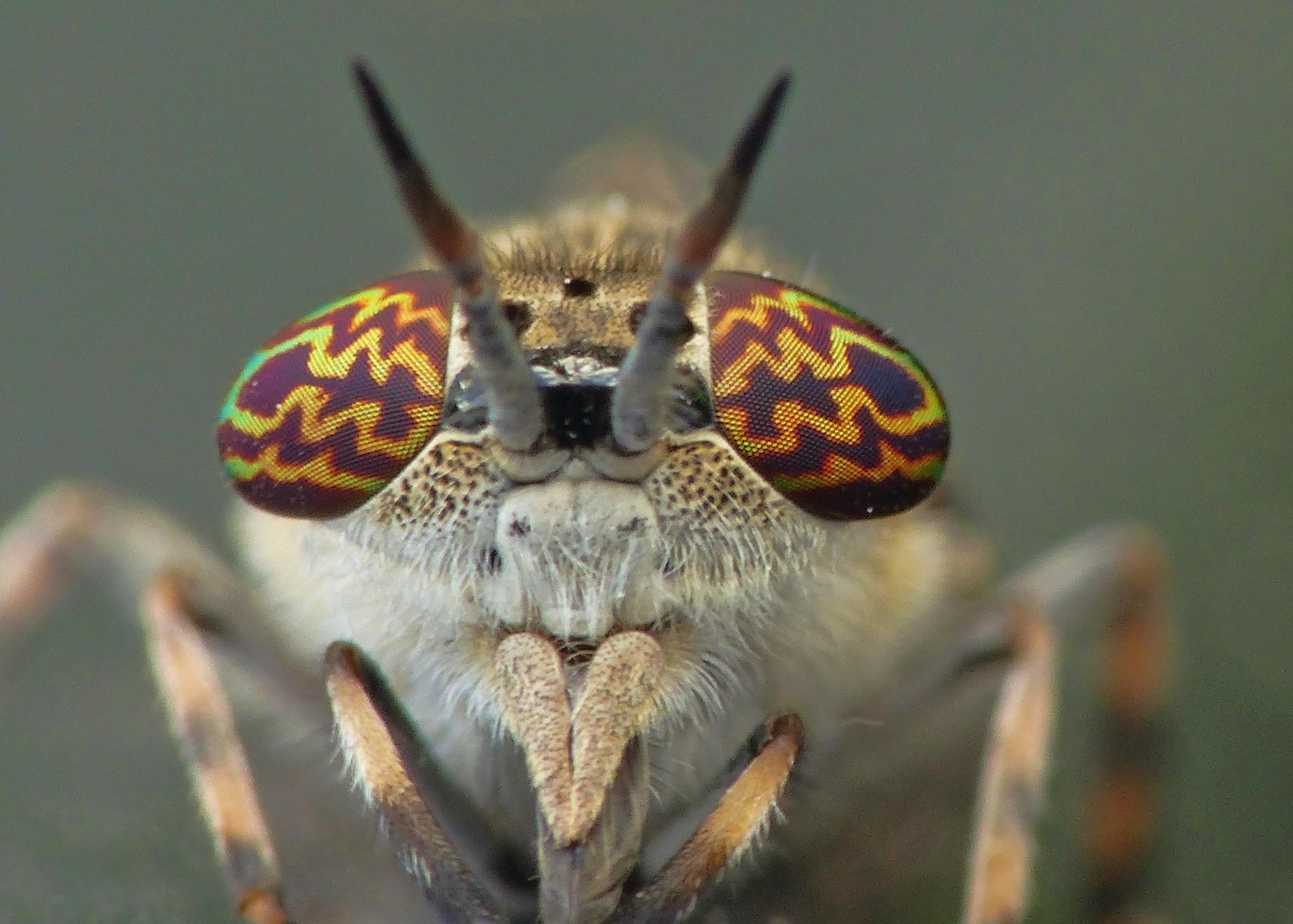 Insekter som bits