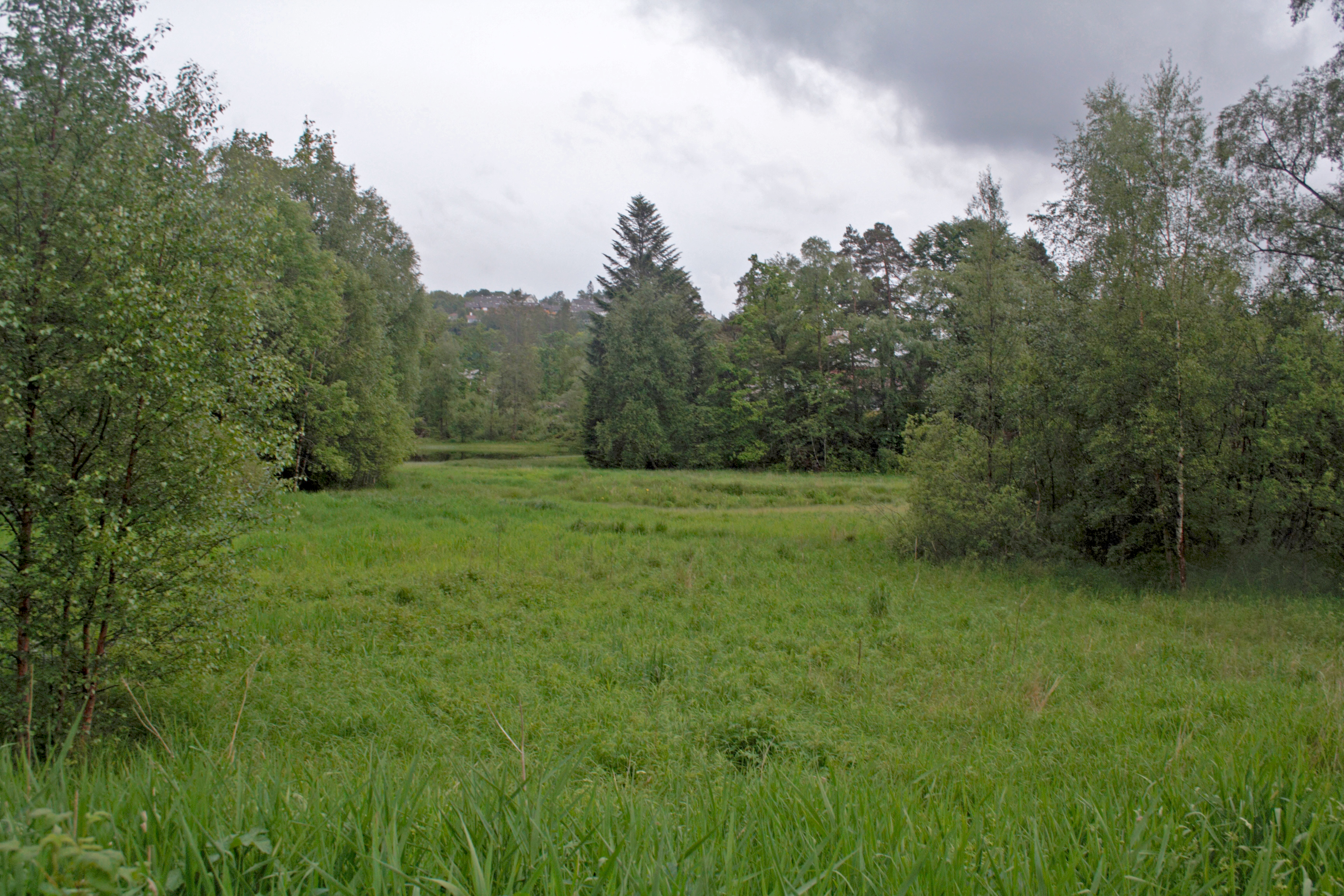 Ein av lokalitetene der Gunnar samla (foto: G.M. Kvifte).
