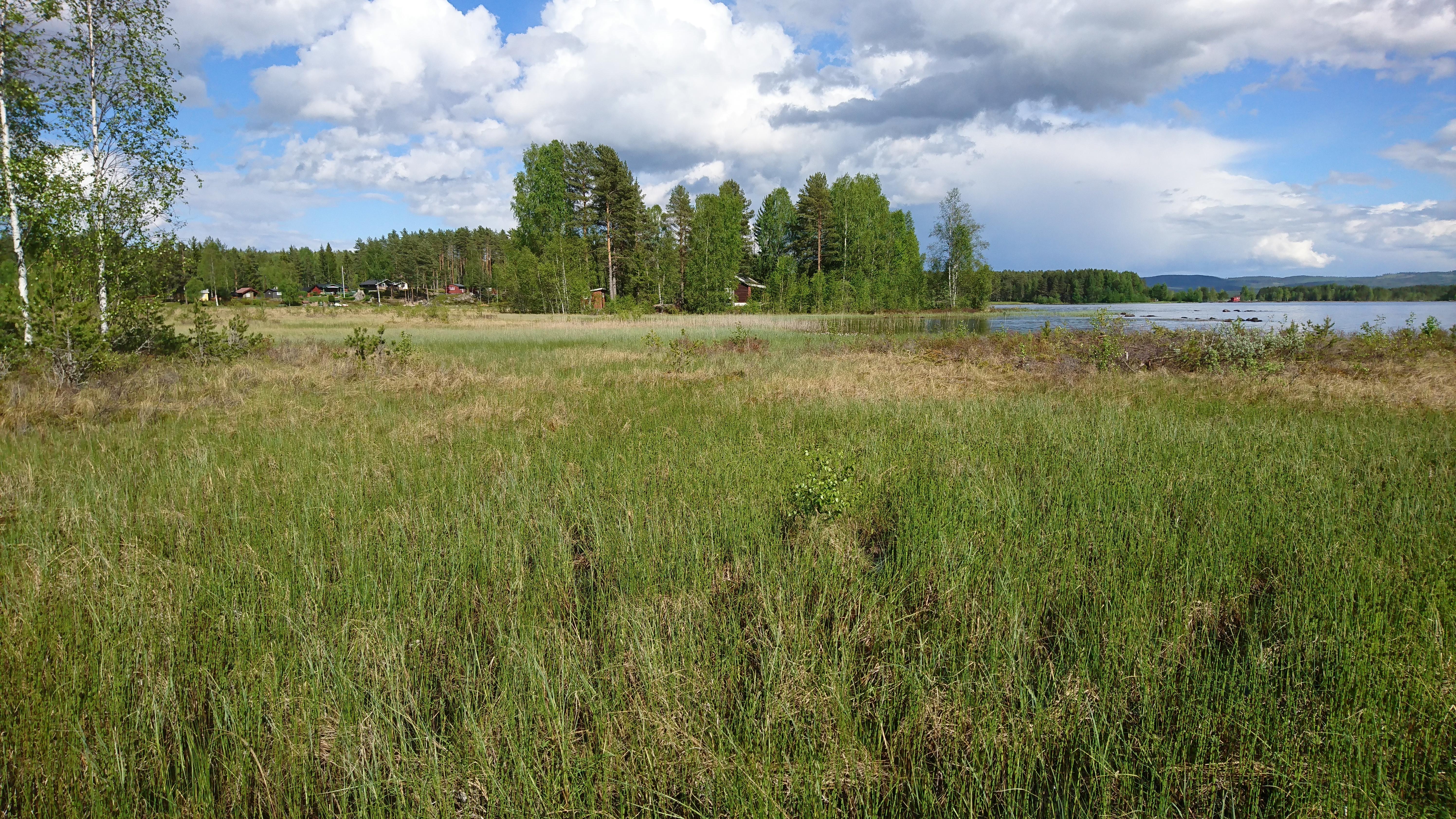 Rikmyra Sandåker i Løten kommune, der Linn jakta etter arter 5. juni (foto: L.K. Hagenlund)